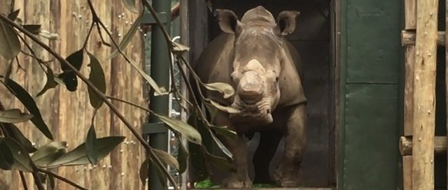 care for wild rhino sanctuary november news