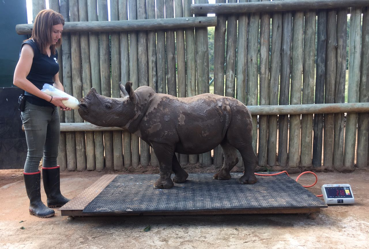 white rhino rehabilitation