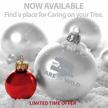 Cafe-For-Wild-Ornament
